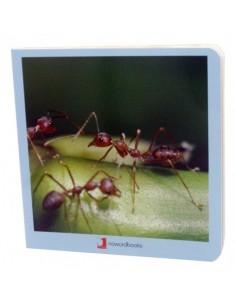 """Libro de fotografías """"Animalitos"""" NOWORDBOOKS"""